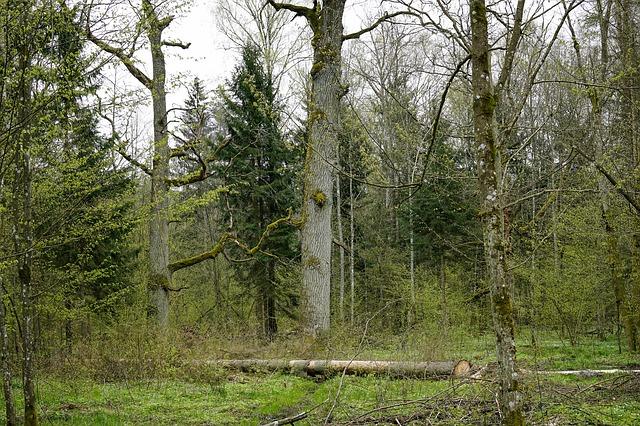 Dlaczego Puszcza Białowieska jest wyjątkowa